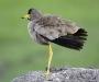 0004-uganda-wildlife-08