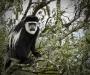 0006-uganda-wildlife-10