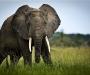 0006-uganda_wildlife-15